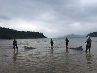 A seine net is pulled by two people, one at each side, while the others followed the net and picked up rocks that may entangle the net.