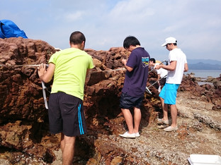 Conducting a transect survey along a rocky shore