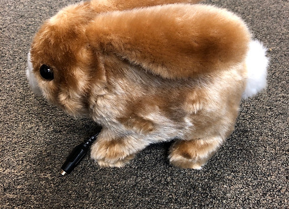 Switch Activated Rabbit