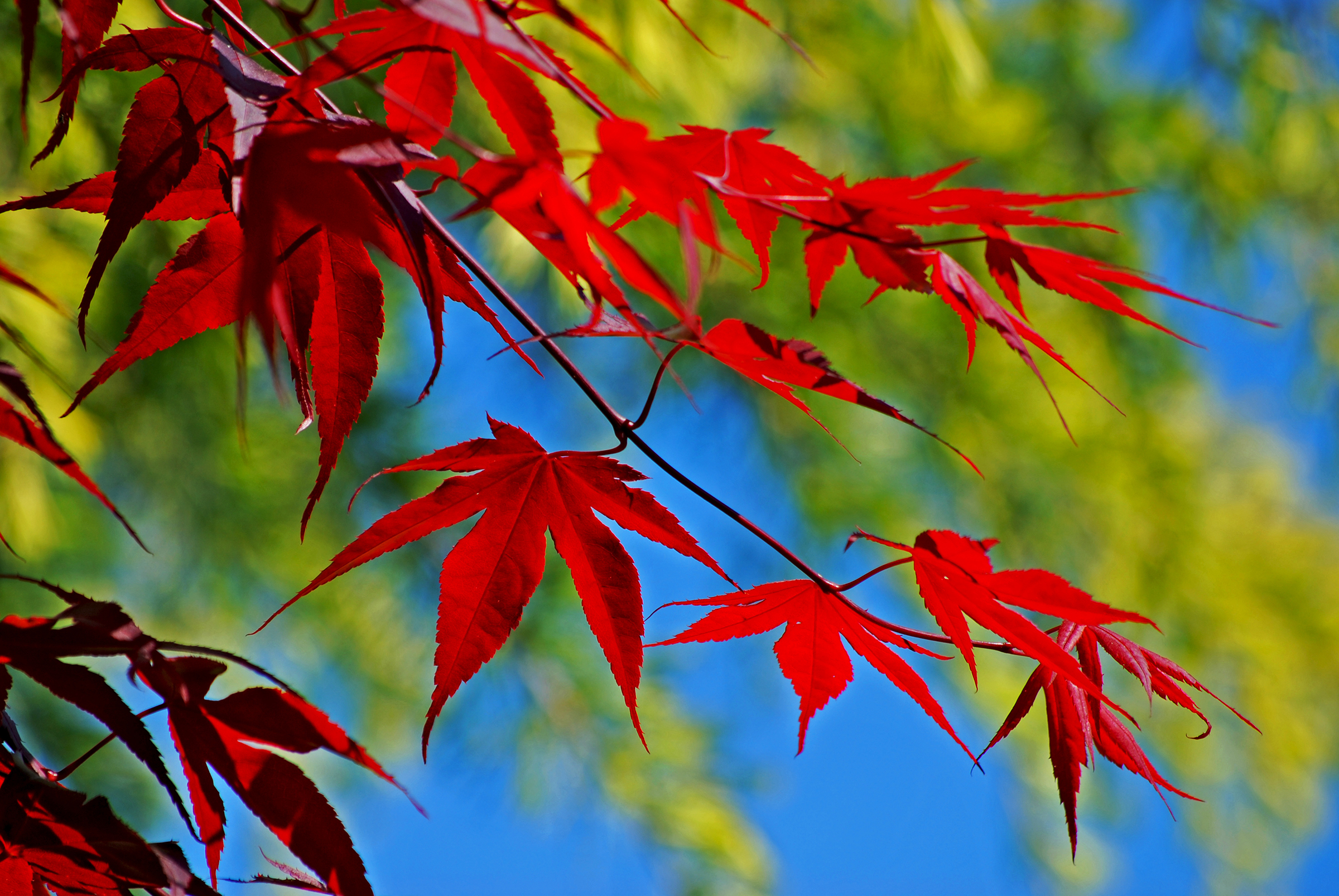 Herbst Wollerau SZ