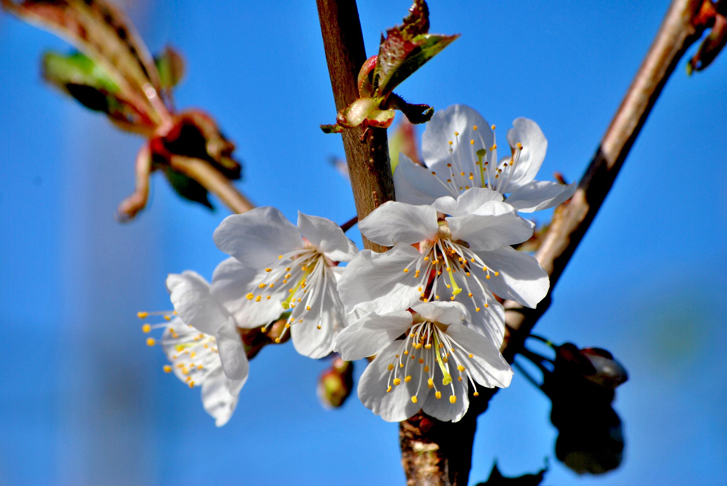 Frühling ist da...