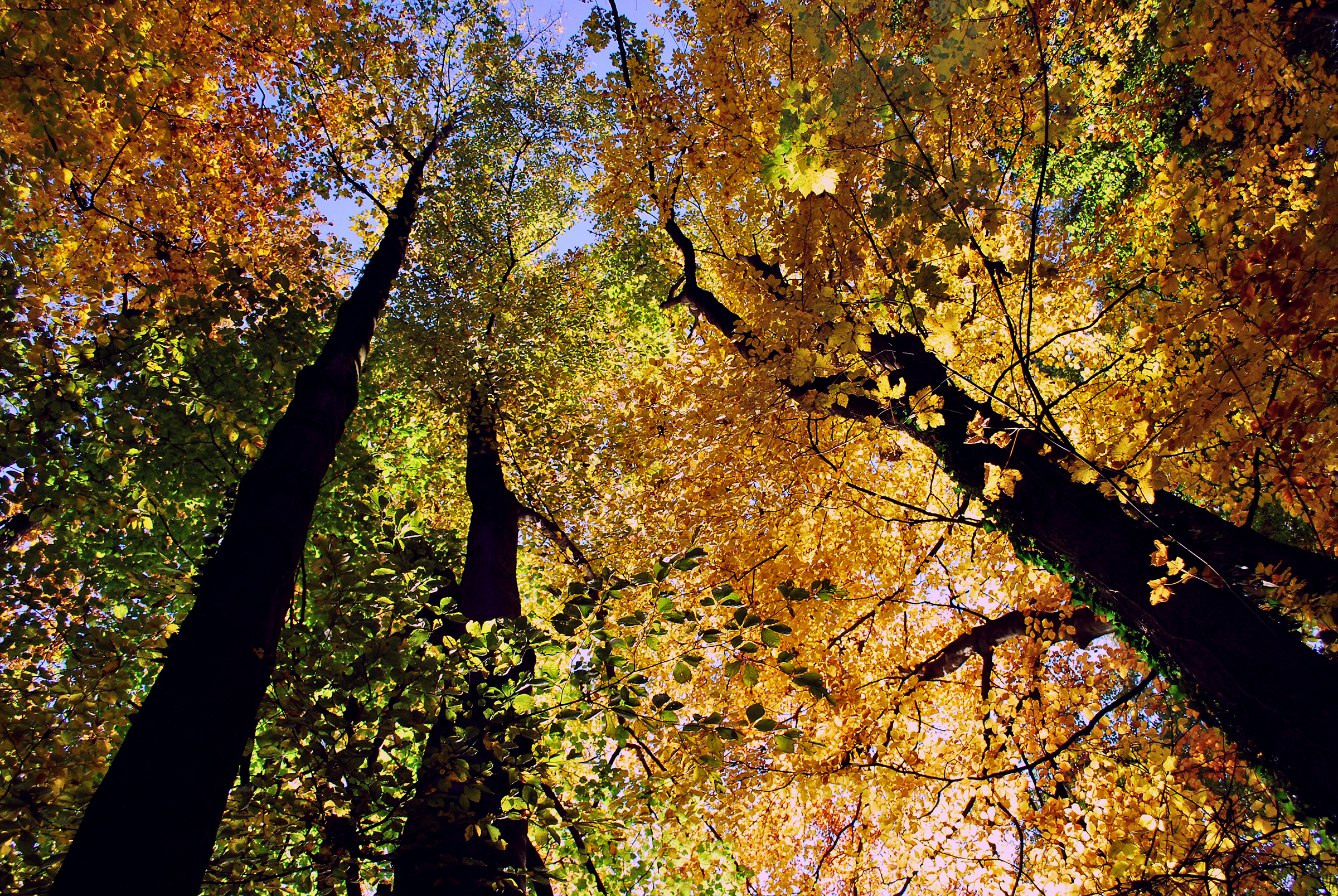 Herbst Halbinsel AU ZH