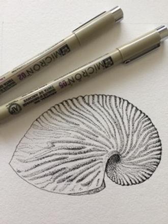 shell & pen.jpg