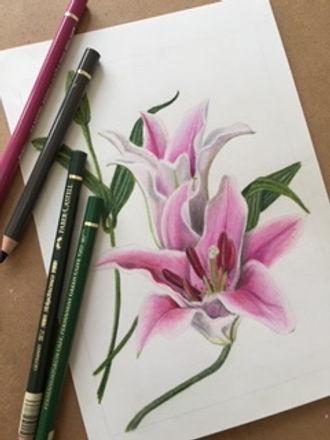 lily pencil.jpg