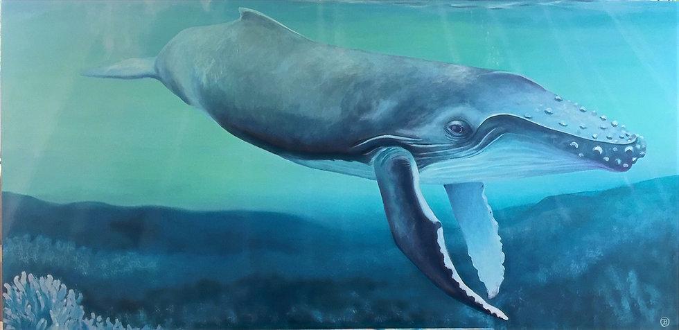 humpback%20whale_edited.jpg