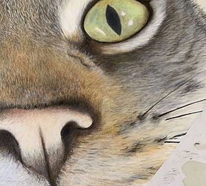 Working%20on%20nose%20furs%20today!%20_)%20have%20used%20a%20mix%20of%20Derwent%20artist%20%26%20gra