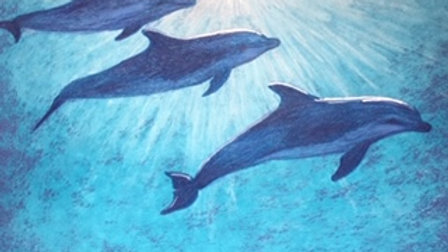 Dolphins - greeting card