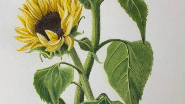 'Sunflowers' print