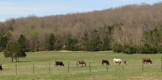 animals-grazing-768x381.png