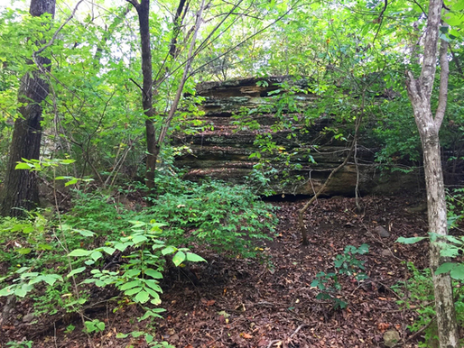 50 Acres on Washington Mountain Permanently Protected