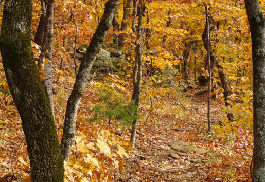 15 Things to Know Before You Hike