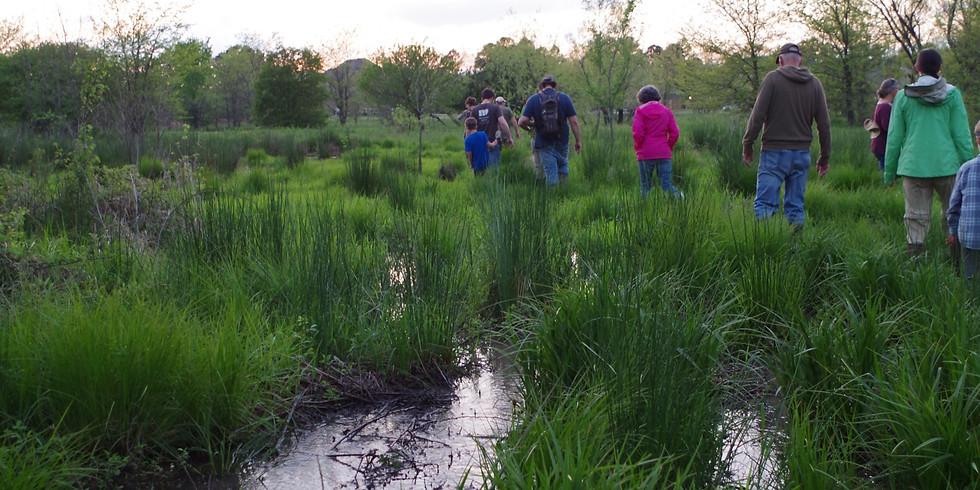 Wetland Walk at Wilson Springs Preserve