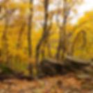 kesslerfallcolors.jpg