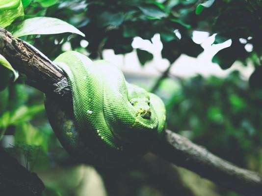 Bye Bye Black Snake