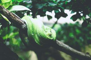 Rüyada yılan görmek
