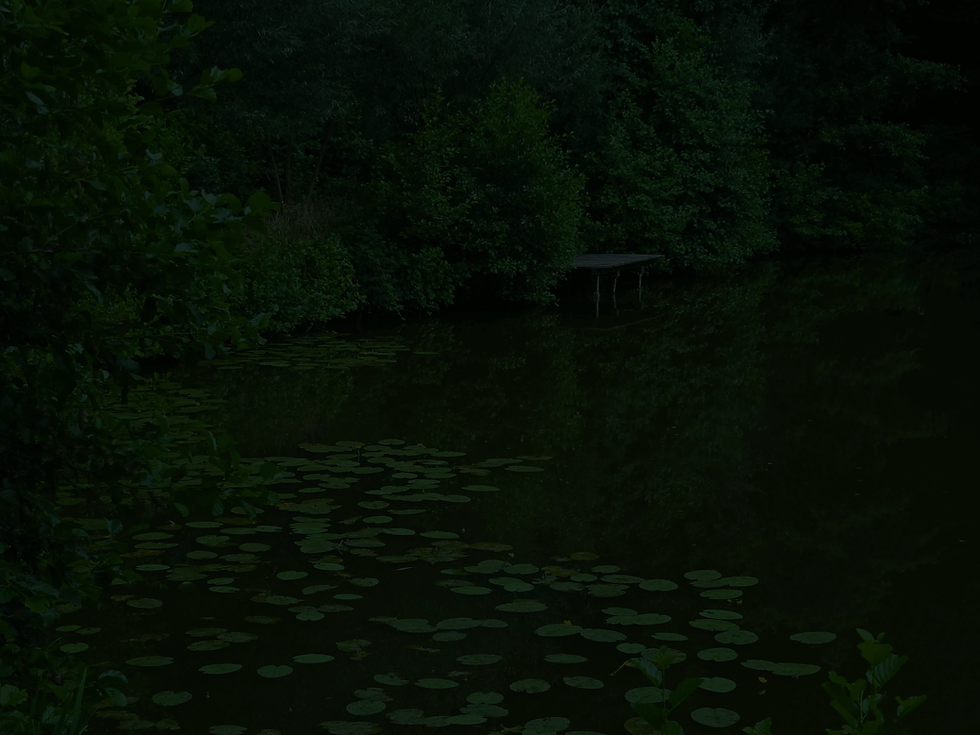 pond-555812_1920 (1).png
