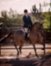 Azabache Arabians. Arabian Horse Breeders and Arabian foals for sale in Texas