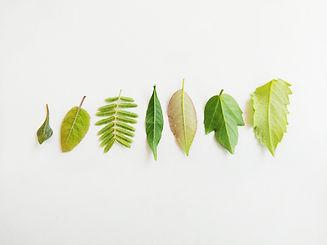image-vie secrete des arbres.jpg