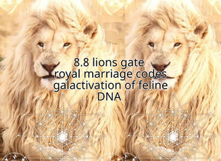 Ascension report: 8:8 lions gate royal marriage codes & feline DNA activation