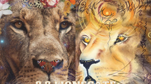Twin Flame ascension report: 8.8 lions gate royal marriage of the lion and lioness of Judah