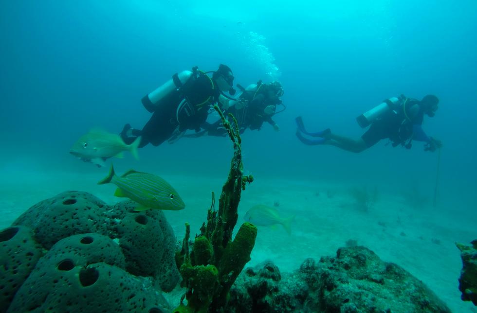 PADI-Divers