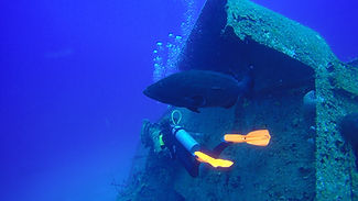 PADI-specialty-courses Tortuga-dive-center Roatan-Honduras.JPG