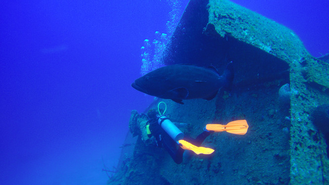 Diver and Grouper at the shipwreck