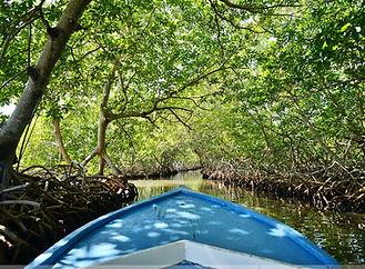 mangrove-canal-tours.jpg