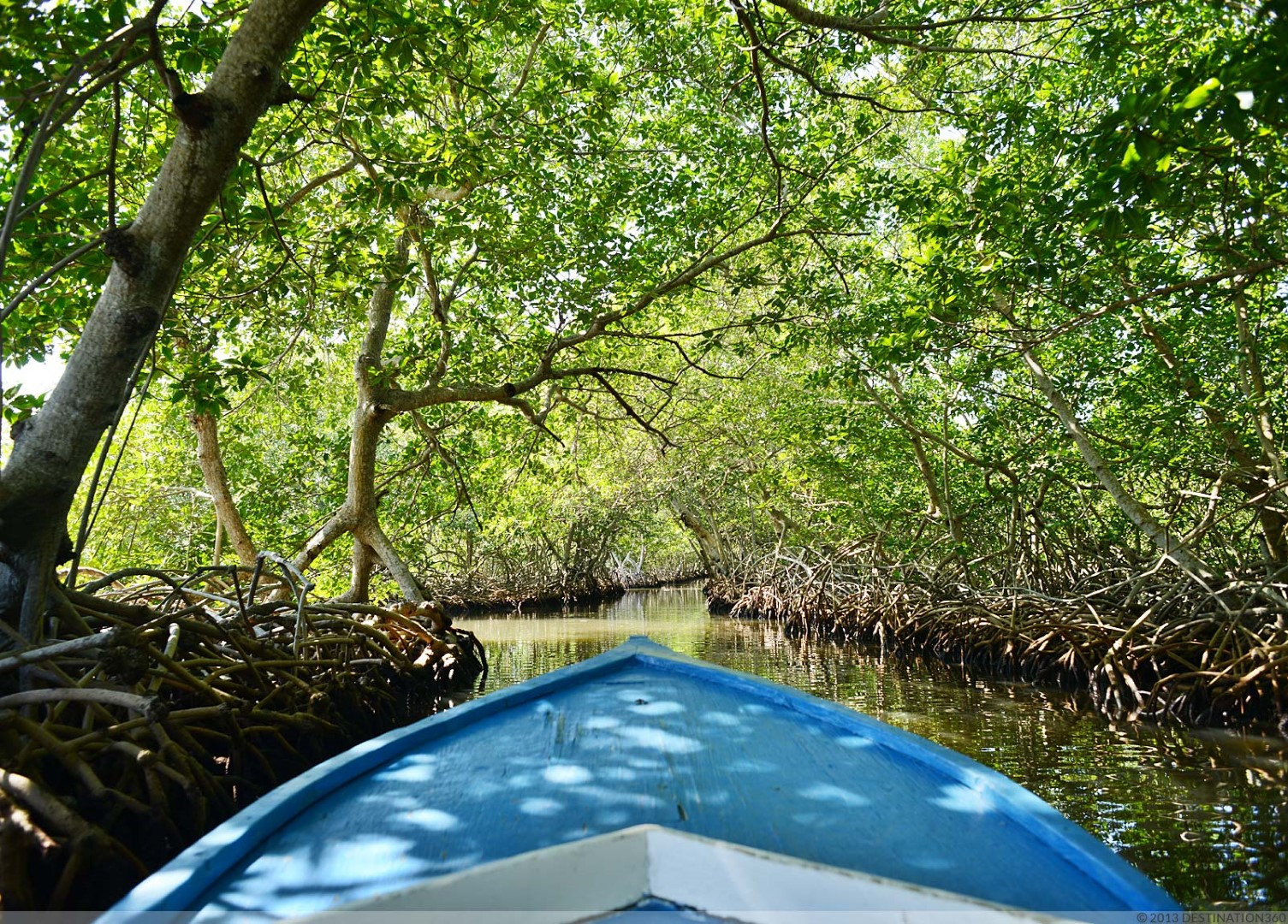 Roatan Mangrove & Snorkeling Tour