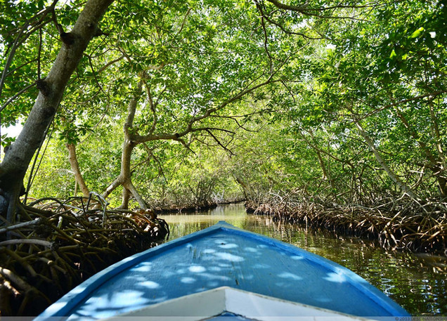 Exploring the mangrove canal.jpg