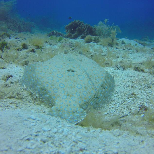 marine-life-honduras