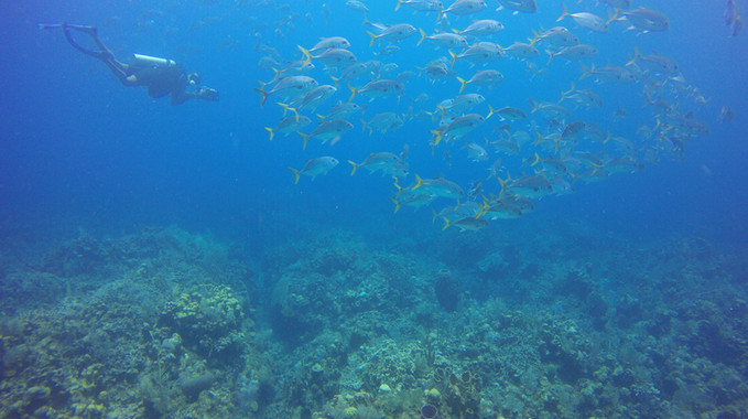 Diver-sealife-roatan-honduras