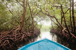 Explore the Mangrove system..jpg