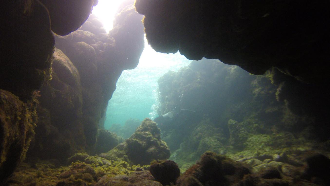 Meso-American-Reef