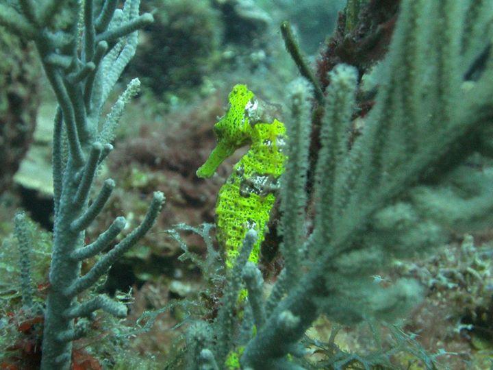 sea-life-roatan