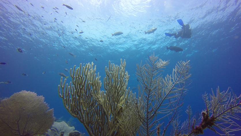 Roatan-snorkeling