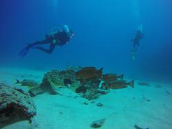 Diver-life Roatan-home-rentals Tortuga-dive-cente