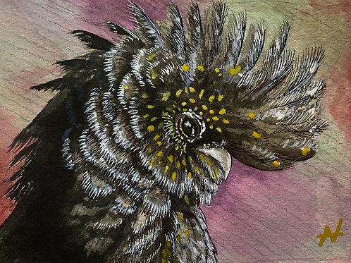 """""""Black Cockatoo"""" by Noah Hartley"""