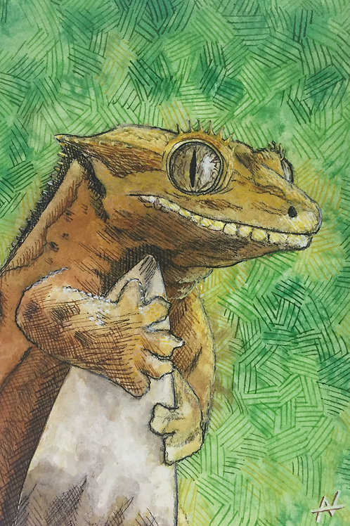 """Crested Gecko"" by Noah Hartley"