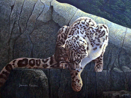 """Hasty Descent - Snow Leopard"" by  James Kiesow"