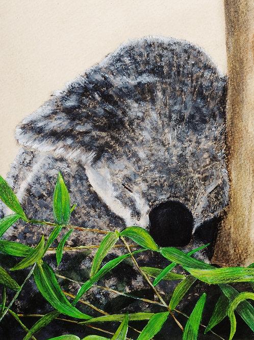 """""""Koala-Nite, Nite"""" by Monica Carrell"""