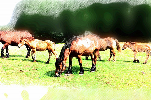 """""""Horse Family"""" by Larysa Jaromska"""