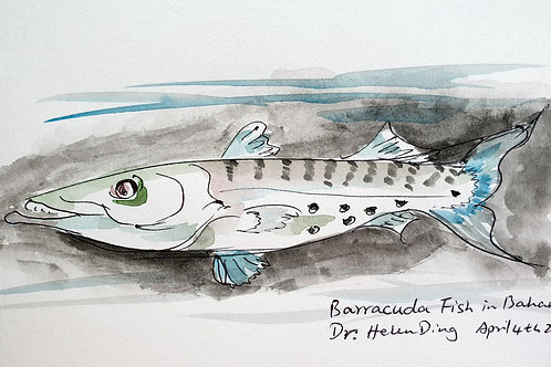 """Barracuda in the Bahamas"" by Dr. Helen Ding"