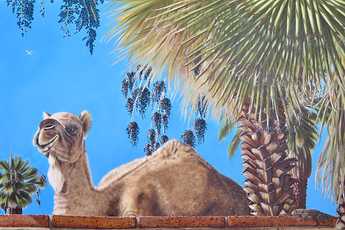 """Jamaal Amidst the Washingtonia Fileferas"" by Déborah M.G. Cassolis"