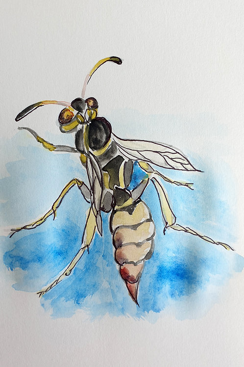 """""""Wasp in the Bahamas"""" by Dr. Helen Ding"""