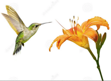 """Birds, Blooms, and Bach"""" - Matthew 6:24-34  Cantata 51"""