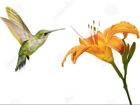 "Birds, Blooms, and Bach"" - Matthew 6:24-34  Cantata 51"