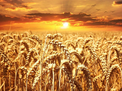 Wheat & Weeds & Transformation