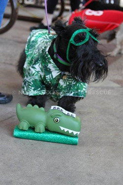 Toby crocodile rock