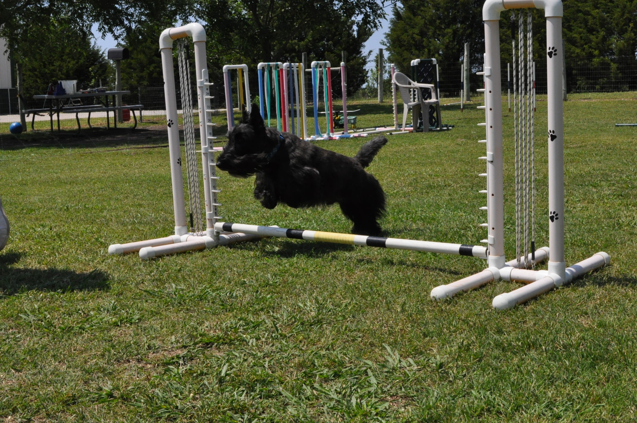 Toby agility